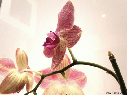 flowersoverflowers (17)